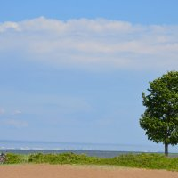 дерево :: Karlygash Khassenova