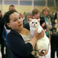 белая кошка :: Александр Корнелюк