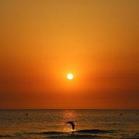 прекрасный закат :: Елена