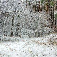 И выпал снег :: Юрий Стародубцев