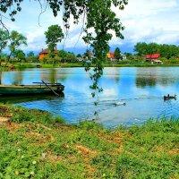 Утки на озере. :: Николай Крюков