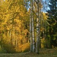 осенний лес :: Елена