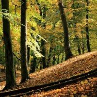 Осень в парке :: Андрей Николаевич Незнанов
