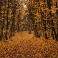 осенний лес... :: Лариса Н