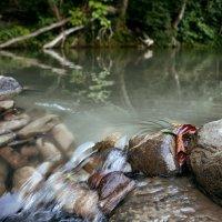 Река :: Виктория Велес