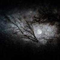 Луна :: Кирилл Богомазов