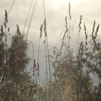 Утренний туман :: Владимир Гилясев