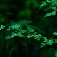 Бриллиантовая зелень :: Татьяна Захарова