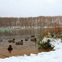 Падет снег. :: Анатолий Круглов