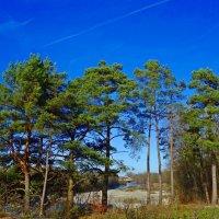Изменить состоянье души может лес.... :: Galina Dzubina
