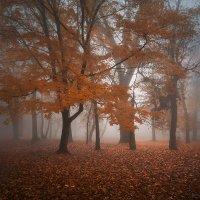 о туманах ноября :: Владимир Князев