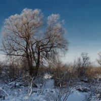 Морозец :: Виктор Четошников