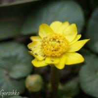 цветок :: Надежда Горошко