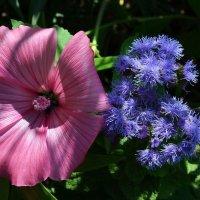 Нежные цветочки :: Вера Андреева