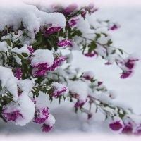Тихо падает на землю снег... :: Альбина Еликова