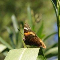 бабочка :: İsmail Arda arda