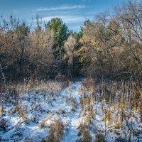 Forest :: Марк Додонов