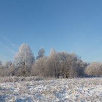 Мороз и солце... :: Светлана