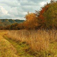 Рыжая осень. :: Сергей Калиновский