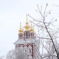 Новодевичий :: Elena Ignatova