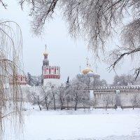 Зима в Новодевичьем :: Elena Ignatova