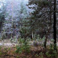Вспоминая грибную охоту... :: Лесо-Вед (Баранов)