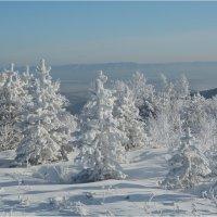 Снежный ноябрь :: Владимир Тюменцев
