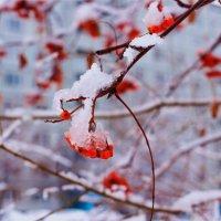 Когда выпал мокрый снег... :: Юрий Стародубцев