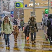 Кого только не встретишь на московском переходе... :: Ирина Шарапова
