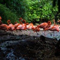 Фламинго :: Евгений Евдокимов