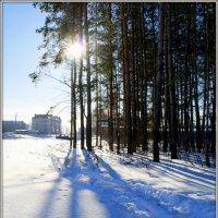 Мороз и солнце... :: Андрей Заломленков