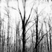 Ноябрьский  лес. :: Валерия  Полещикова