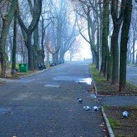 В осеннем парке утром :: Ростислав