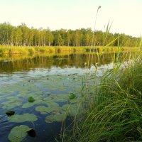 Небольшое озеро. :: nadyasilyuk Вознюк