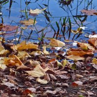 Осень в своем разнообразии :: Наталья (D.Nat@lia) Джикидзе (Берёзина)