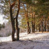 Первый снег. :: Александр Тулупов