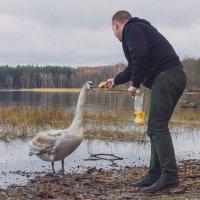 Лебединый обед :: Игорь Вишняков