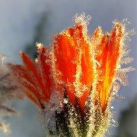 Аленький цветочек :: Павлова Татьяна Павлова