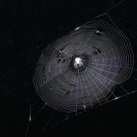 Ночь, паутина :: Наталья М