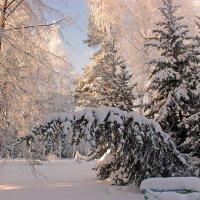 Прелесть утренней зимы :: Елена ))