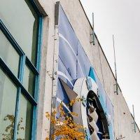 Березка на окне. :: Сергей Щелкунов