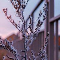 Зимний восход :: Татьяна Котик
