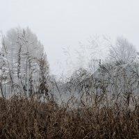 в тумане за полем :: Galina