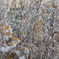 Между осенью и зимой :: Ксения Слободина