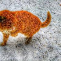Сказочный зимний кот :: Ирина Крохмаль