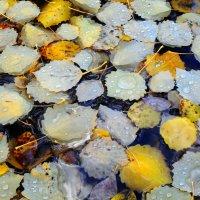 Опавшие листья :: Виктория Браун