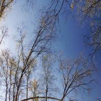 Опушка леса :: Юрий Кольцов