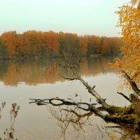 Золотая осень :: Елизавета