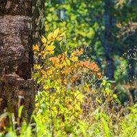 Осенние брызги... :: ФотоЛюбка *