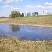 Весенний пруд. :: Мила
